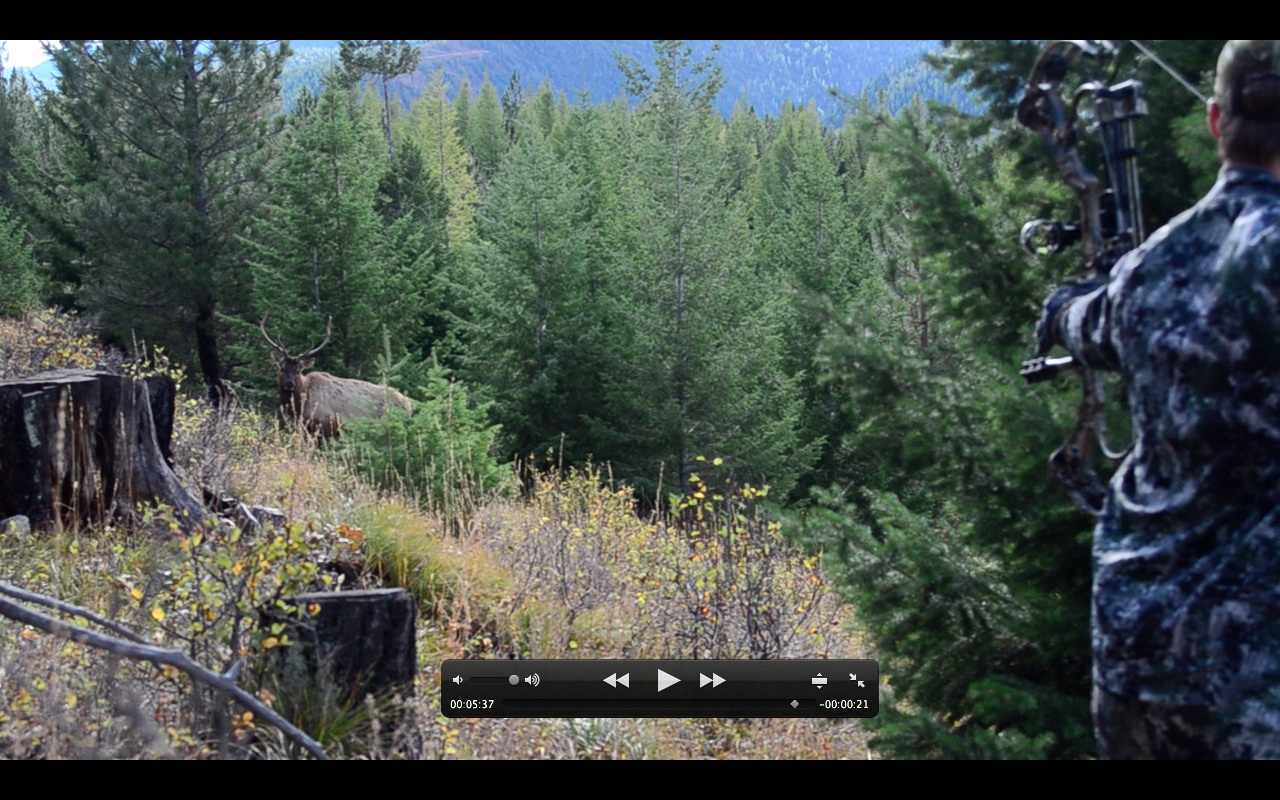 Montana Wild, Montana Wild Outdoors, elk hunting, DIY elk hunting, public land, bull, cow elk, hunting, matthews, bear archery, sitka, kings camo, easton fmj, trophy ridge, scott releases, carbon express maxima, rage broadheads, g5 montec cs, ripcord, Montana hunting, Montana outdoors, montana hunting district 292, university of montana, russell outdoors