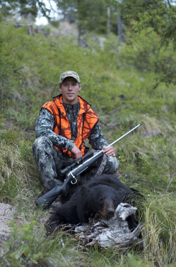 montana black bear, spring bear hunting in montana, blazed black bear, montana sow black bear, montana wild bear hunt