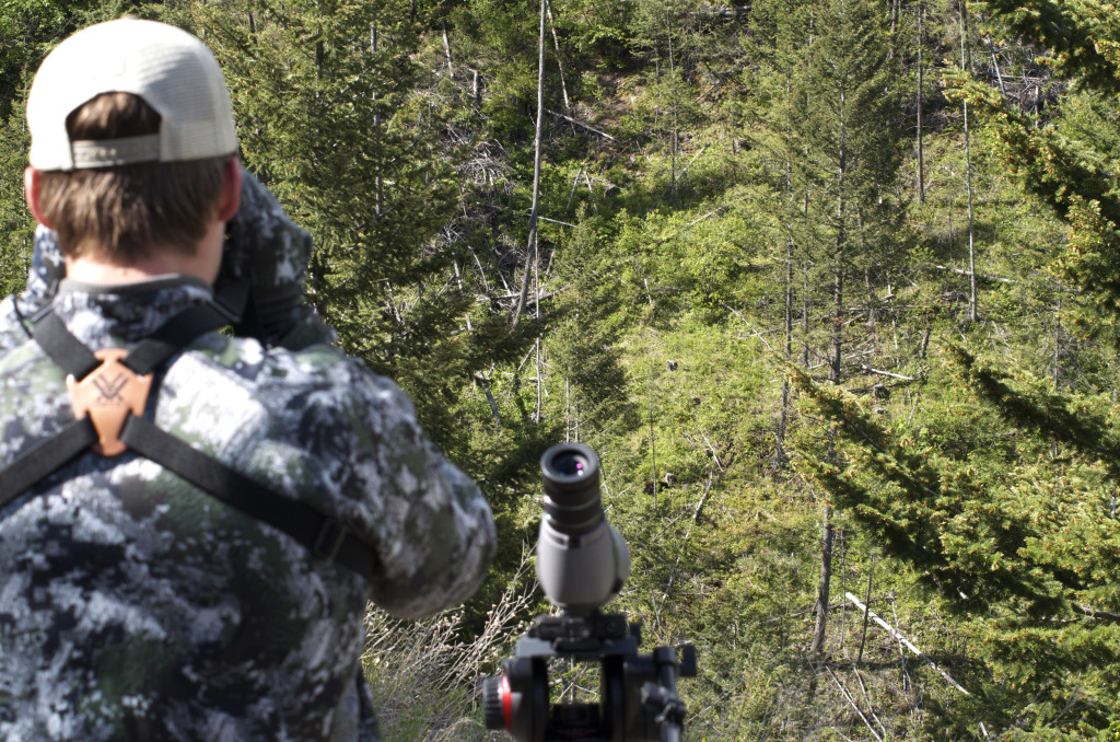 black bear, montana wild, MT, hunting, spring, bowhunting, spot and stalk, Bear Anarchy, Vortex, Carbon Express, Nikon, GoPro