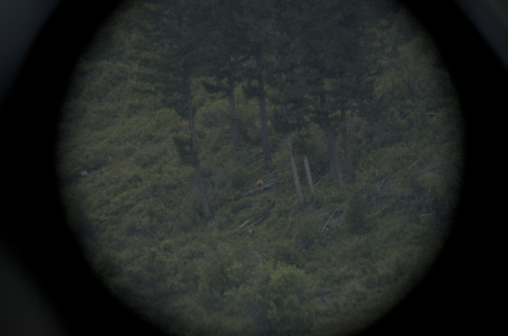 bear hunting, Montana Wild, black bears, bowhunting, archery, Nikon D7000, hunting videos, timelapses, Bear Archery, Anarchy, Carbon Express