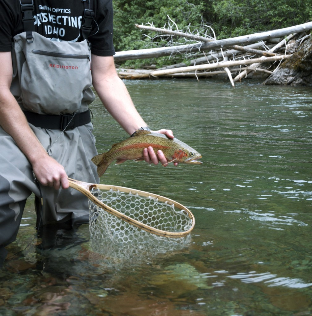 backcountry fly fishing, montana wild, native cutthroat trout, bull trout, wilderness, western mt, summer, 2012, nikon d7000, dry fly