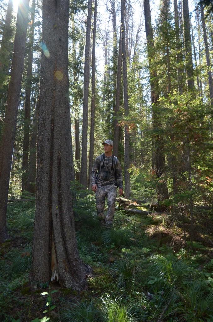 Elk scouting, western montana, montana wild, elk hunting, moultrie, game cameras, sitka, vortex, wallows, summer 2012