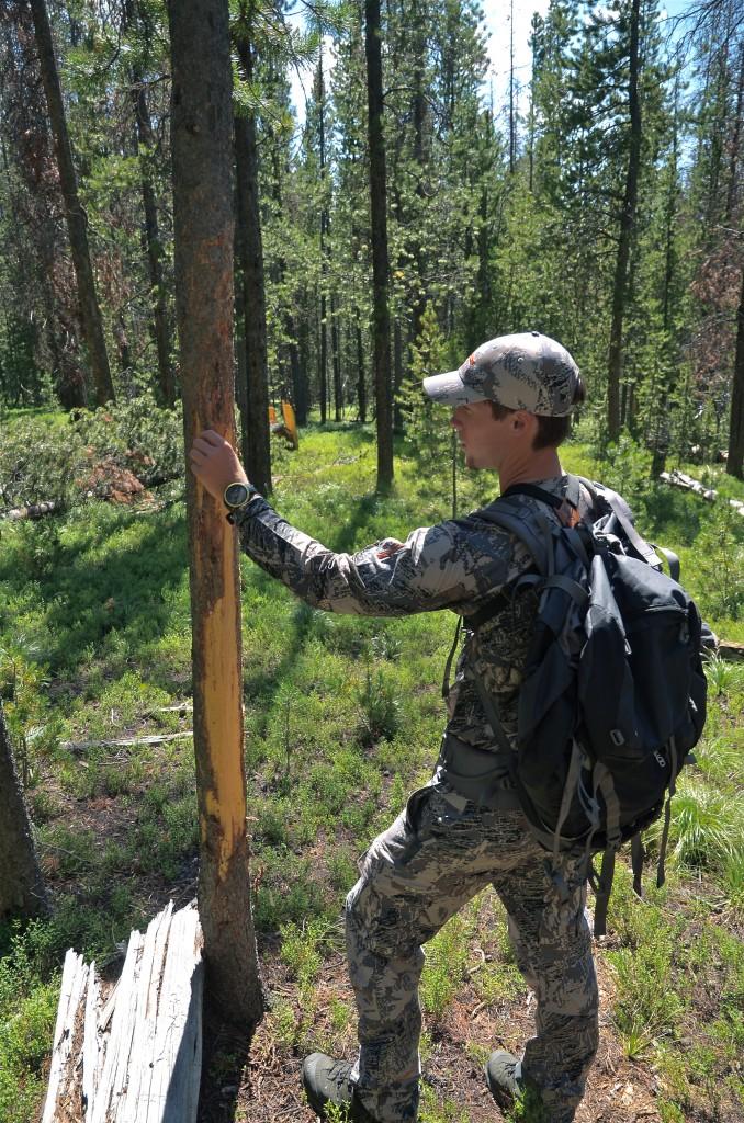 elk scouting, western mt, montana wild, sitka, vortex, moultrie, game cameras, summer, 2012
