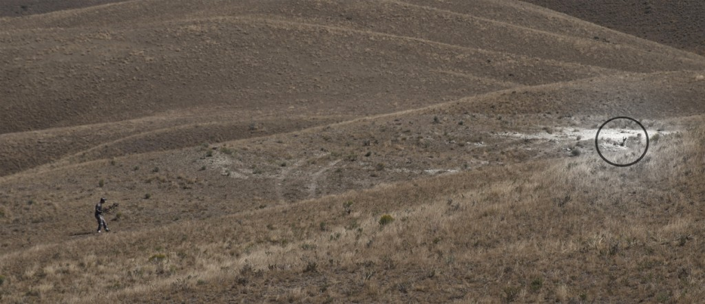 stalking antelope, hunting speed goats, montana speed goats, best stalking technique