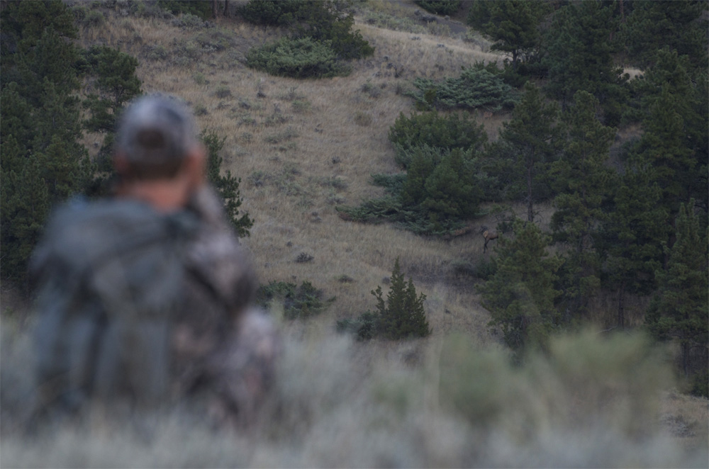 Glassing Montana Bull Elk, elk hunting Missouri Breaks, Montana Wild Hunting