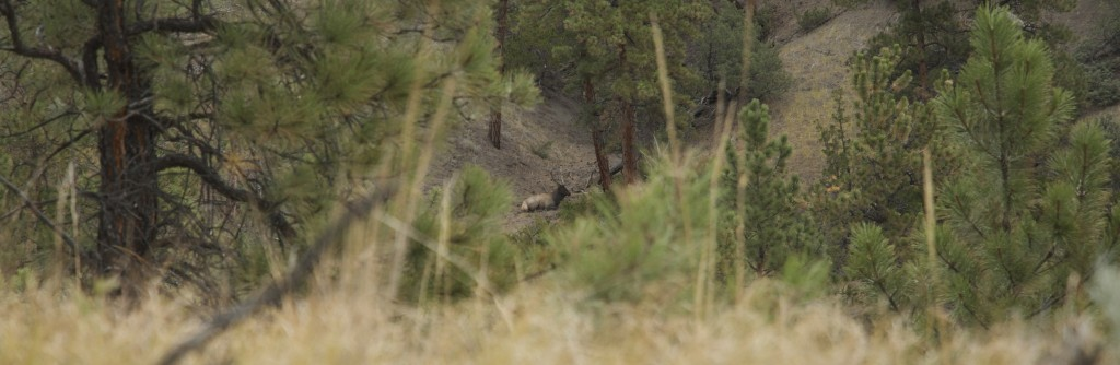 elk hunting, videos, montana wild, Missouri Breaks, bowhunting, HD 621, Sitka Gear, trophy, Vortex Optics, Mystery Ranch, 300 class bull