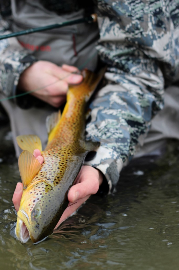 brown trout, montana, winter, wild, outdoors, streamers, slab