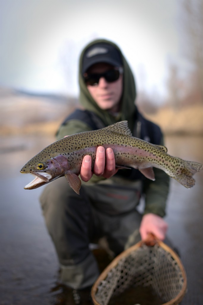 Rainbow, montana, spots, nets