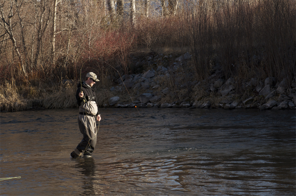 fly fishing, montana, rainbow, trout, wild, missoula