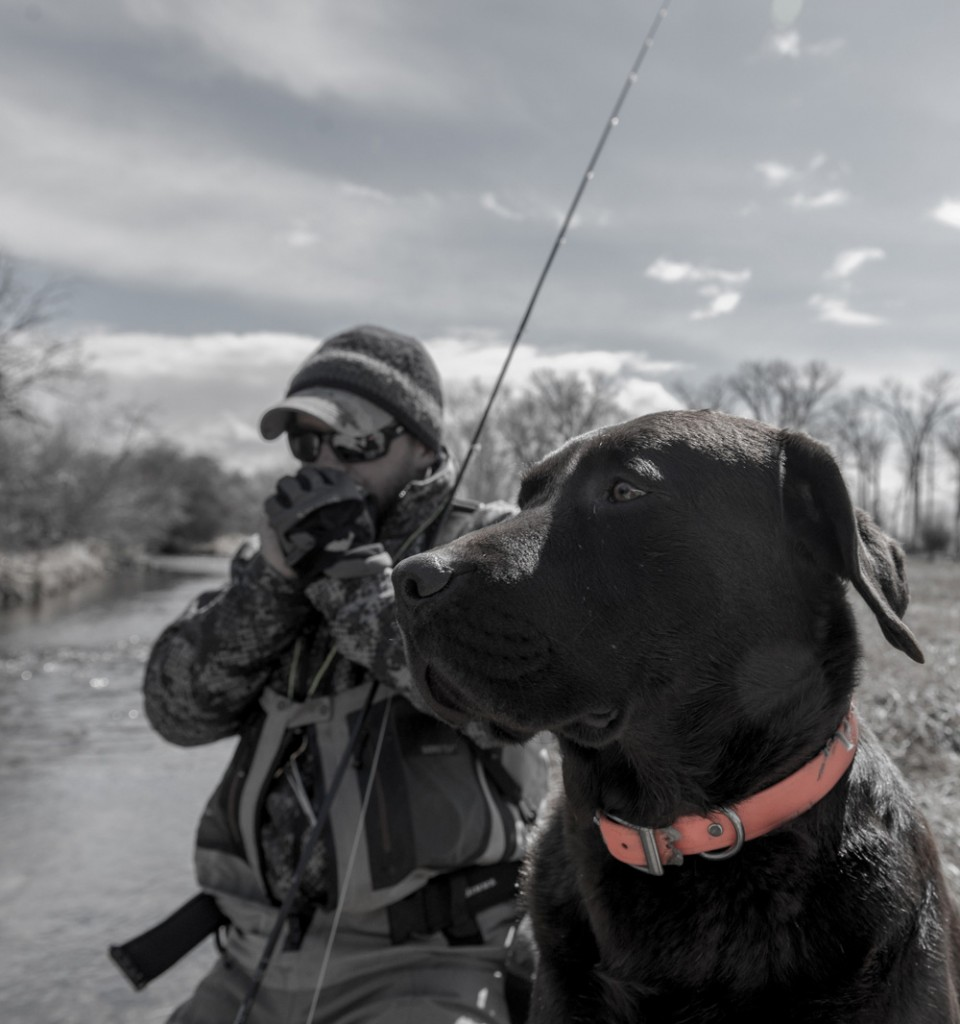lab, brown, man's, best, friend, montana, fishing, dog