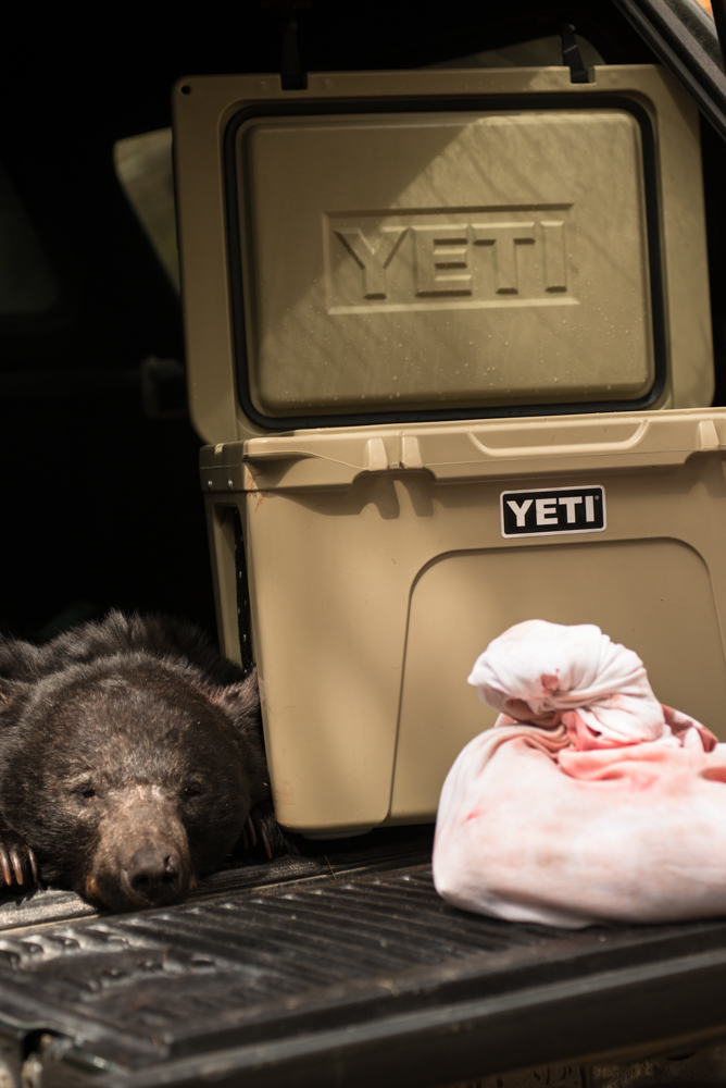 bear, hunting, YETI, Coolers, montana, wild, spring, 2013, ford, tundra 50
