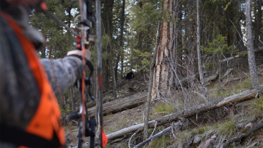 screenshot, video, bear, hunting, montana, 30, yards