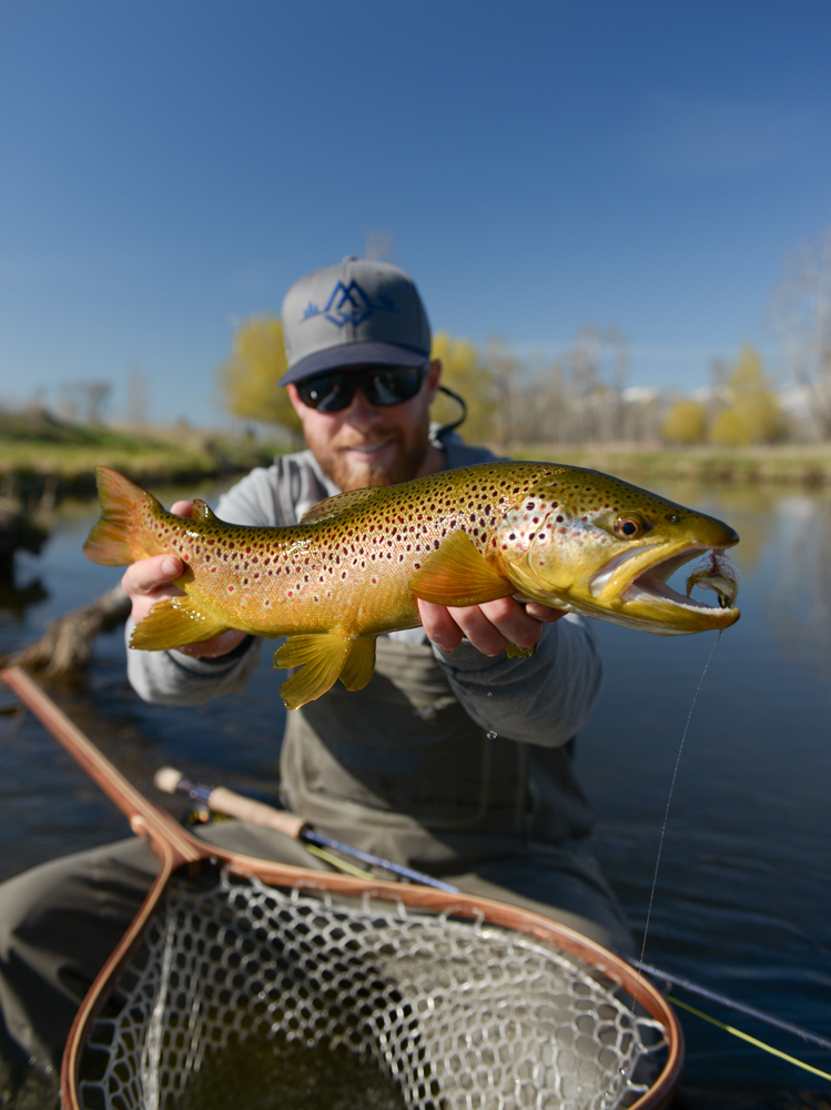 Montana brown trout for Trout fishing hat