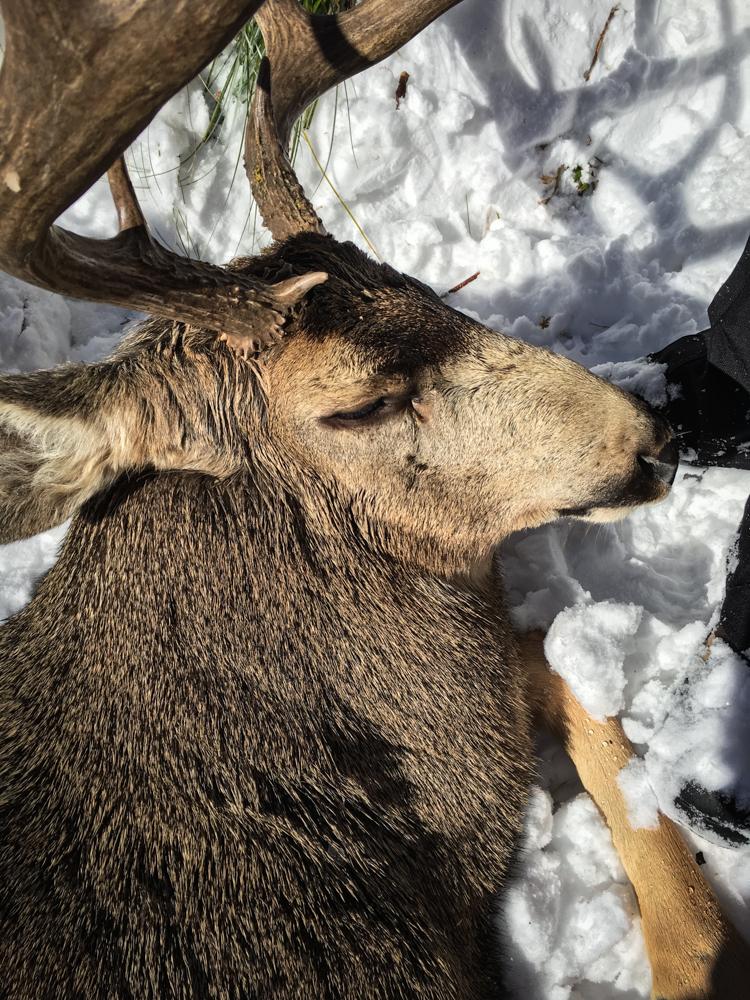 montana wild, muledeer, 406, hunting