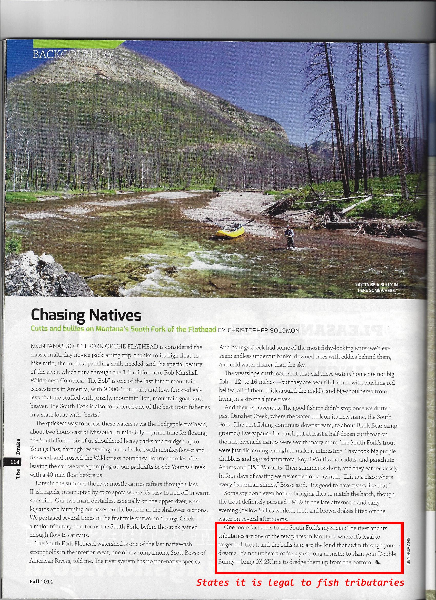bull trout, the drake, magazine, montana, wild, fwp